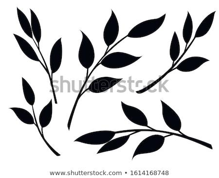 Ayarlamak şube siluetleri yaprakları doğa dizayn Stok fotoğraf © gladiolus