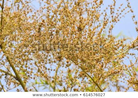 çiçekli bambu bitki bahçe çiçek ağaç Stok fotoğraf © brebca