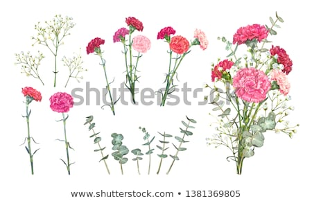 red clove bouquet of carnations set carnation flowers stock photo © orensila