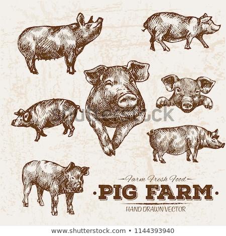 単純な スケッチ 豚 実例 白 お金 ストックフォト © bluering