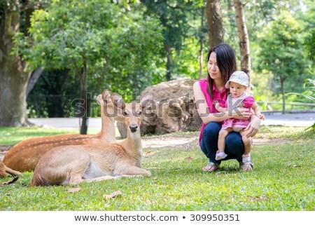 female chamois feeding her kid Stock photo © taviphoto