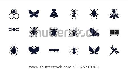 Iconen insecten illustratie witte ogen achtergrond Stockfoto © bluering