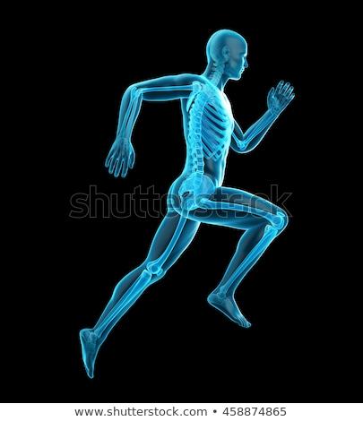 3d render çalışma iskelet adam spor tıbbi Stok fotoğraf © maya2008