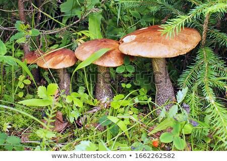 свежие · белый · Cap · грибы · мнение · продовольствие - Сток-фото © Digifoodstock