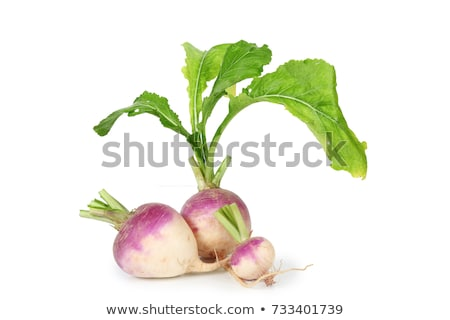 Turnips stock photo © naffarts