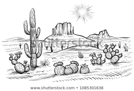 Sivatag jelenet kaktusz naplemente illusztráció művészet Stock fotó © bluering