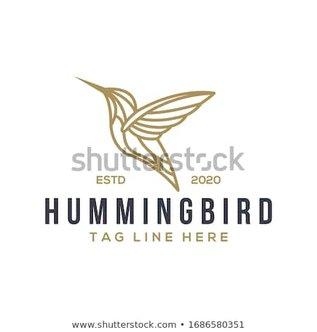 Hummingbird логотип стилизованный аннотация дизайна лет Сток-фото © tracer