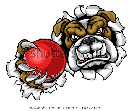 ブルドッグ クリケット スポーツ マスコット 怒っ 動物 ストックフォト © Krisdog