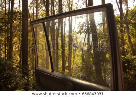 Forest seen from open car door Stock photo © IS2