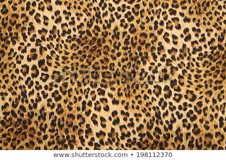 Gepárd bőr textúra nyomtatott minta haj Stock fotó © SArts
