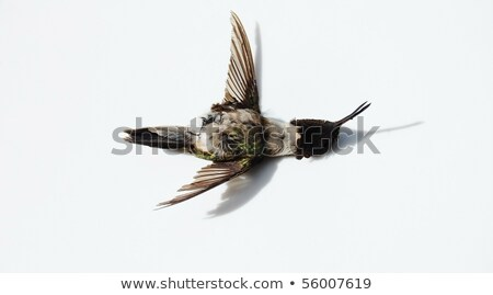 Sad Little Hummingbird Stock photo © cthoman
