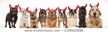 Photo stock: Adorable · chiens · rouge · diable