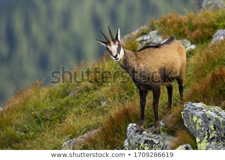 güderi · gözler · doğa · ışık · saç · dağ - stok fotoğraf © lightpoet