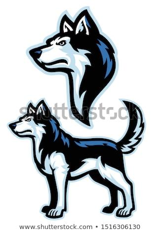 Lobos mascote coleção ícone ilustração conjunto Foto stock © patrimonio