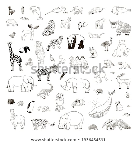 Animal outline for giraffe Stock photo © colematt
