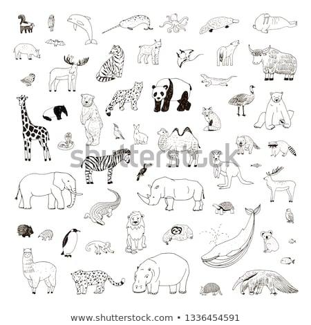 Animal schita girafă ilustrare fundal artă Imagine de stoc © colematt