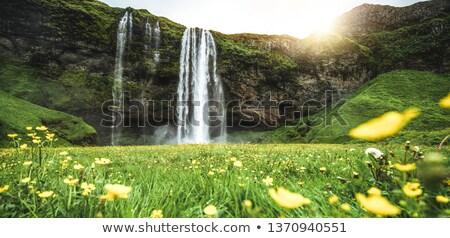 Vue cascade Islande été paysage fleurs Photo stock © Kotenko