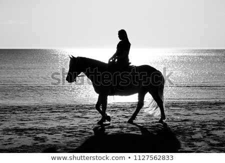 girl riding on haflinger horse in the sea Stock photo © compuinfoto