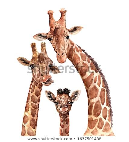 wildlife day giraffe card with african art stock photo © cienpies