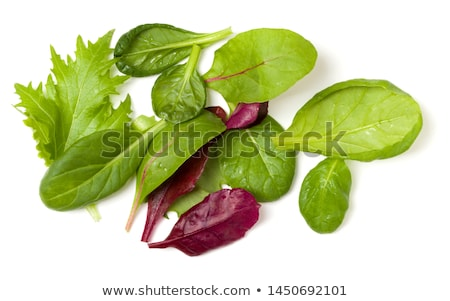 Romaine lettuce and spinach salad Stock photo © karandaev