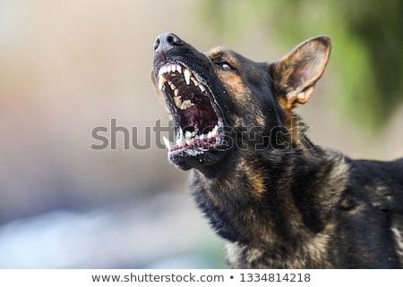 vigyázat · kutya · veszély · díszállat · őr · illusztráció - stock fotó © colematt