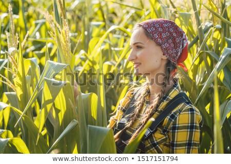 Farmer woman checks out her maize field Stock photo © Kzenon