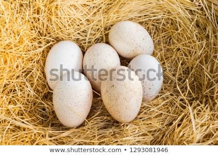 チョコレート バニー 卵 わら 巣 木材 ストックフォト © dolgachov