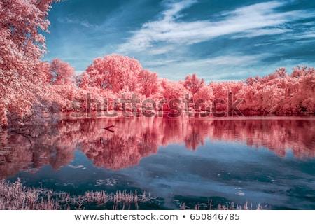 Infravörös tájkép kép gyönyörű erdő folyó Stock fotó © ldambies