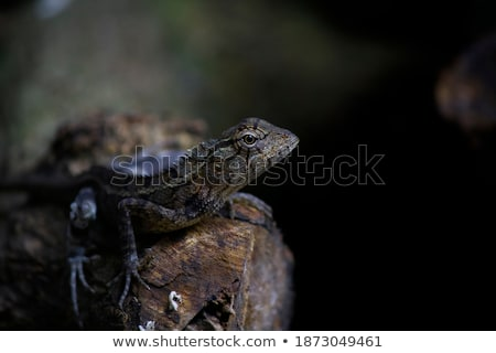 Stockfoto: Colorful Lizard On A Piece Of Wood