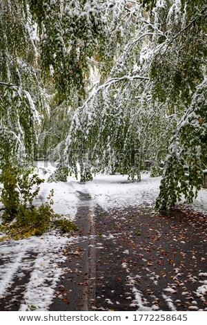 Chutes de neige forêt lourd montagne neige arbres Photo stock © skylight