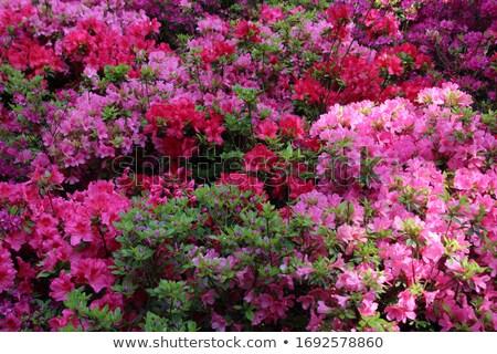 Primavera folhas papel de parede parede abstrato verão Foto stock © bogumil