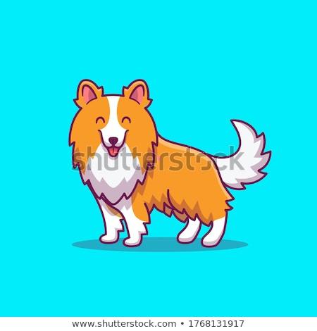 画像 美しい 犬 背景 白 動物 ストックフォト © gregory21
