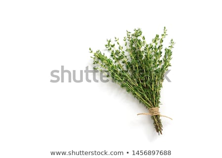 Thyme fresh herb Stock photo © Masha