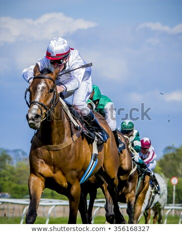 Thoroughbred racing bay stock photo © SKVORTSOVA
