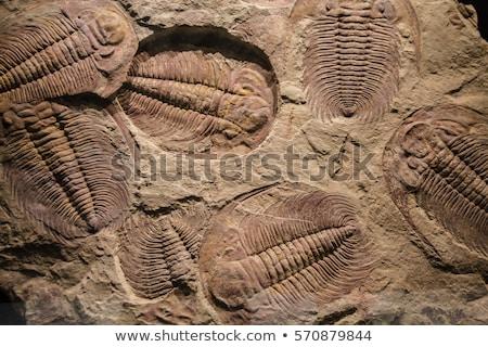 fossile · pietra · rock · esplorazione · pesce · natura - foto d'archivio © jkraft5