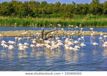 Fransa manzara kuş deniz feneri Avrupa flamingo Stok fotoğraf © phbcz