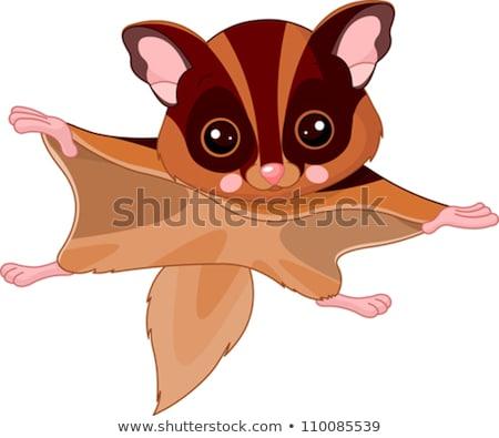 Jókedv állatkert illusztráció aranyos repülés mókus Stock fotó © nik187