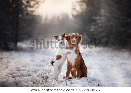 Perro invierno paisaje fecha gran angular lente Foto stock © buchsammy