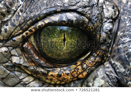Oog krokodil schets cartoon illustratie Stockfoto © perysty