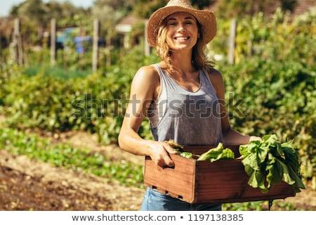 középkorú · nő · tapsolás · zöldségek · egészség · női - stock fotó © monkey_business