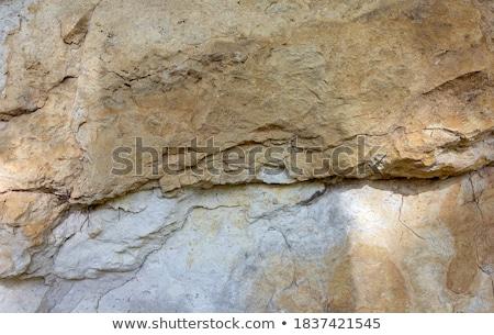 Calcário penhasco texturas natureza planta Foto stock © smithore