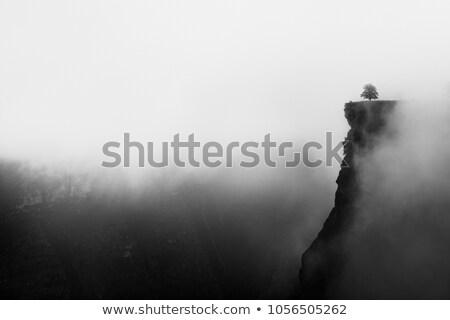 Egyedüli fa szirt magas felfelé felső Stock fotó © silkenphotography