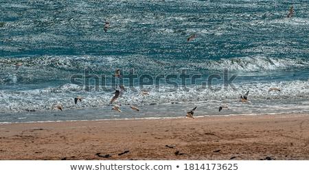 бурный черный морем пляж природы Сток-фото © ankarb