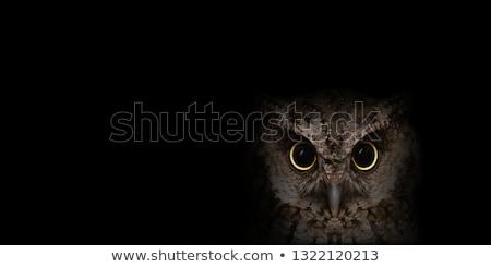 chouette · sur · oiseau · animaux · sol · naturelles - photo stock © photocreo
