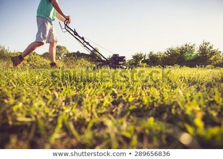 Onderhoud voorjaar voorjaarsschoonmaak gazon omhoog gras Stockfoto © ozgur