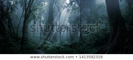 krajobraz · noc · stylizowany · panorama · bezszwowy - zdjęcia stock © tracer