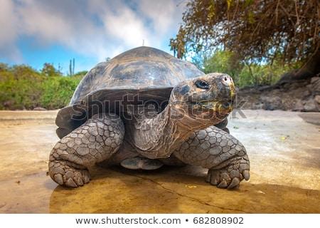 черепахи · отпуск · иллюстрация · счастливым · солнце · стекла - Сток-фото © epstock