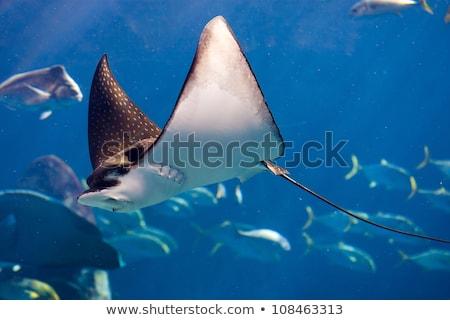 Stock fotó: Lebeg · vízalatti · korallzátony · hal · nap · tenger