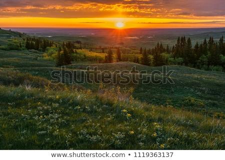 Cyprys wzgórza saskatchewan krajobraz podróży burzy Zdjęcia stock © pictureguy