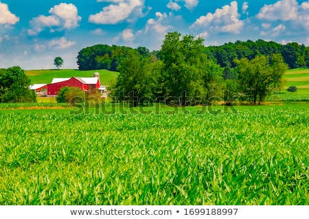 rural area with meadows and trees  Stock photo © meinzahn